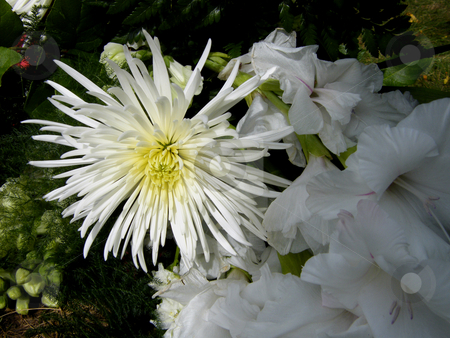 cutcaster-photo-100171563-White-Funeral-Flowers